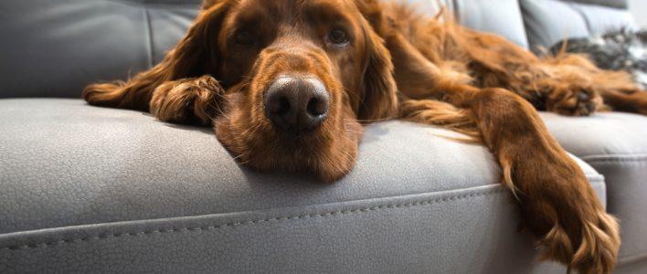tierhaare richtig entfernen tipps gegen hunde und katzenhaare. Black Bedroom Furniture Sets. Home Design Ideas