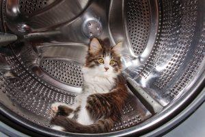 Verfilzte Wäsche reinigen